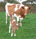 Cow and Calf, Bosworlas